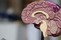 Odkryto rejony mózgu odpowiedzialne za stres