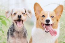 Kudłaci terapeuci - czyli wpływ zwierząt na zdrowie