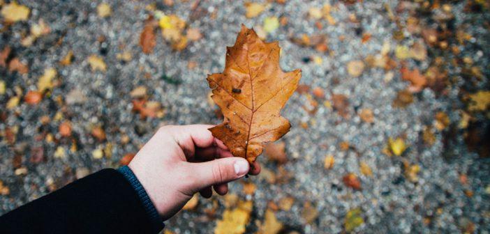 Czeka nas ciężka jesień – Przygotuj się!